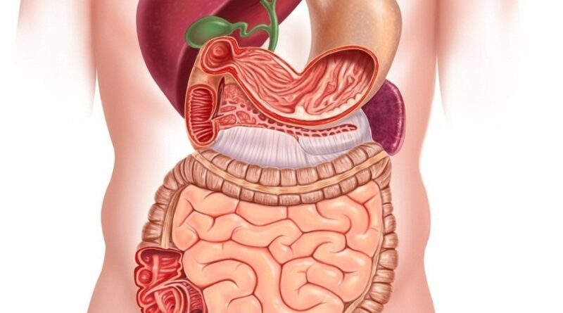 What is the digestive system process
