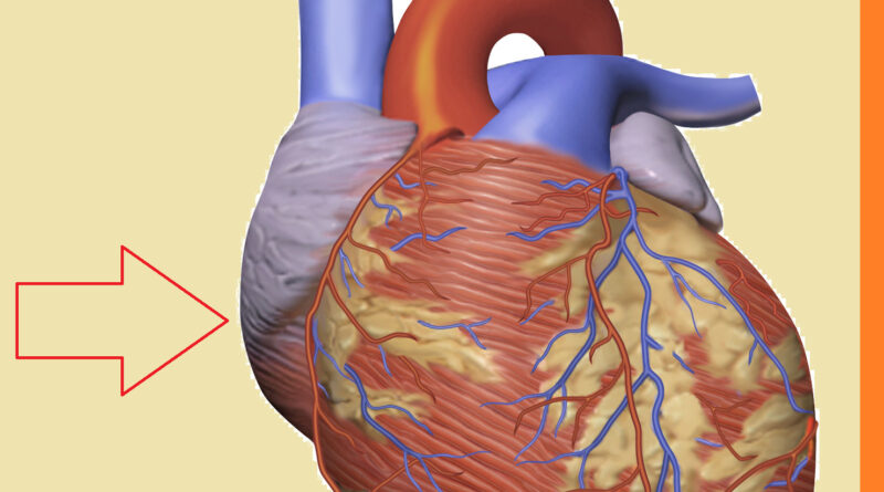 Heart disease symptoms, causes and prevention