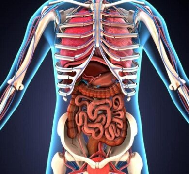 What is the digestive system